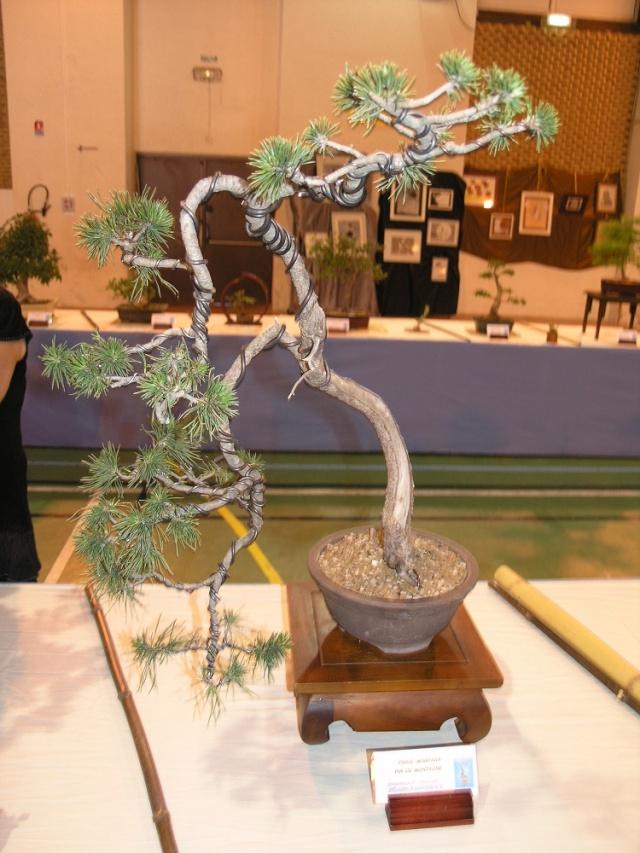 exposition Toulouges les 23-24 juin 2012 par  Le club Kobayashi  P6230618
