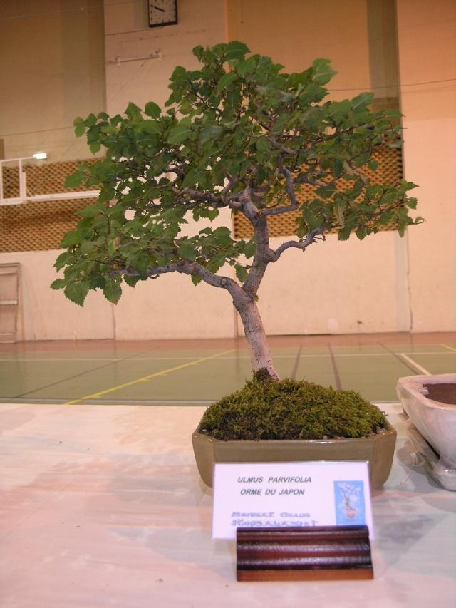 exposition Toulouges les 23-24 juin 2012 par  Le club Kobayashi  P6230711