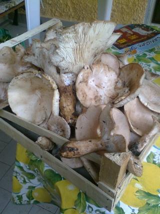 I funghi Immag034