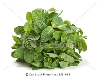 menthe Can-st10