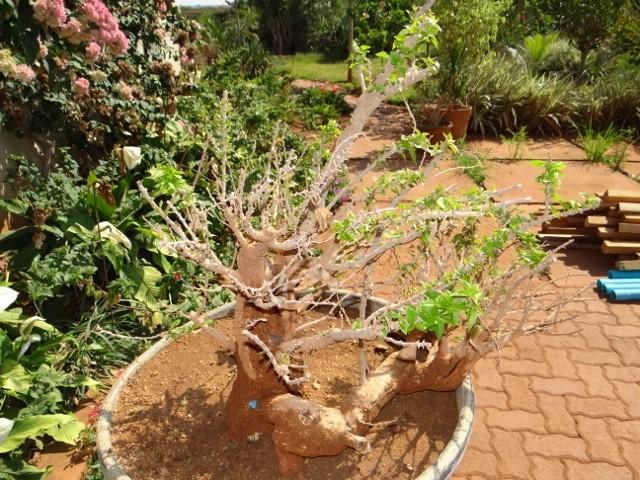 First bonsai help! Dsc00916
