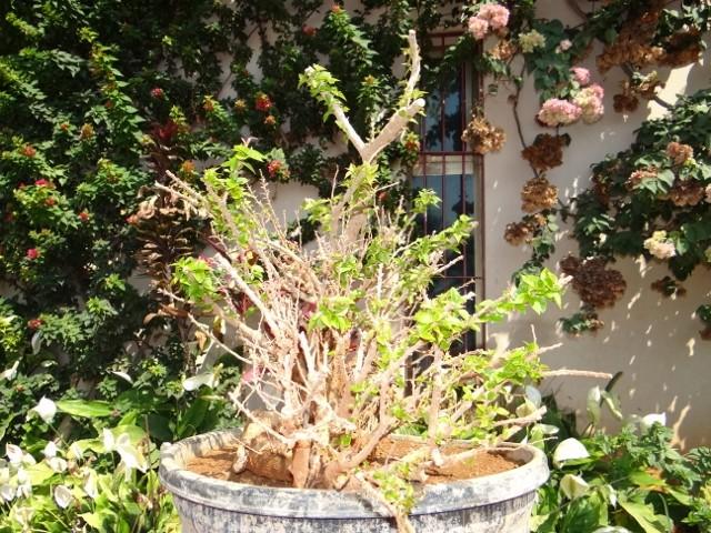 First bonsai help! Dsc00918