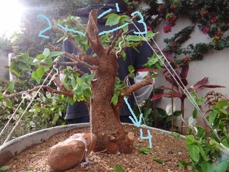 First bonsai help! Dsc01410