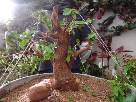 First bonsai help! Dsc01411