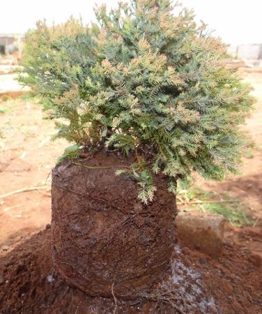 First bonsai help! Dsc01424