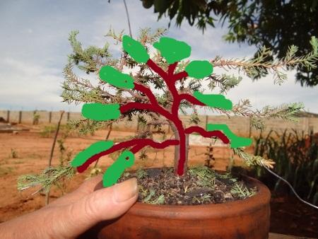 First bonsai help! Dsc01427