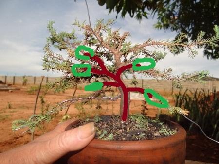 First bonsai help! Dsc01428