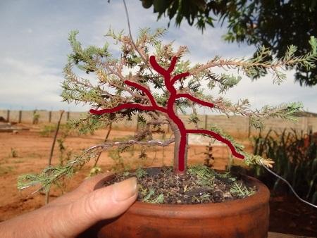 First bonsai help! Dsc01429