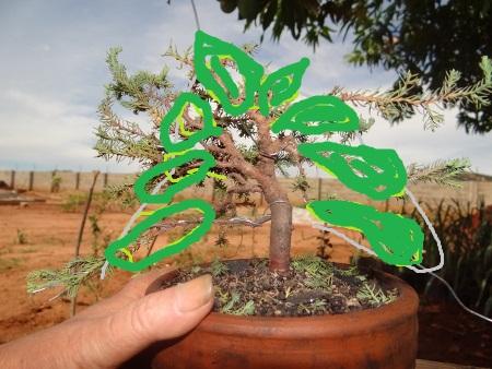 First bonsai help! Dsc01430