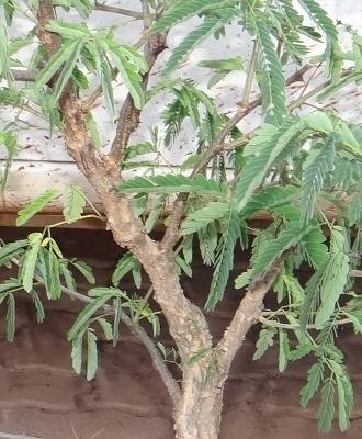First bonsai help! Dsc01616