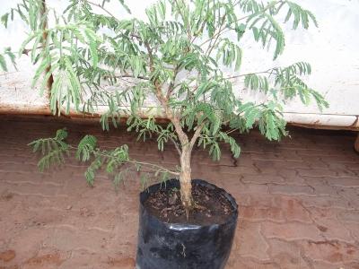 First bonsai help! Dsc01617