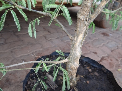 First bonsai help! Dsc01618