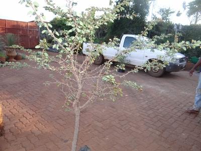 First bonsai help! Dsc01619