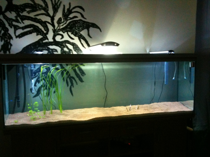 Bac 650 L future biotope amazonien Img_0523