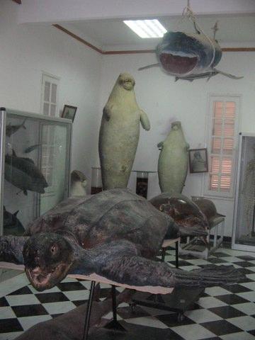 MUSEO DI BIOLOGIA MARINA Img_0010