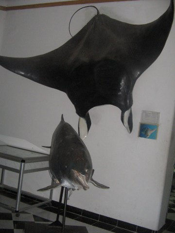 MUSEO DI BIOLOGIA MARINA Img_0011