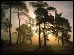 forêt tacheté