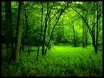 forêt du Green