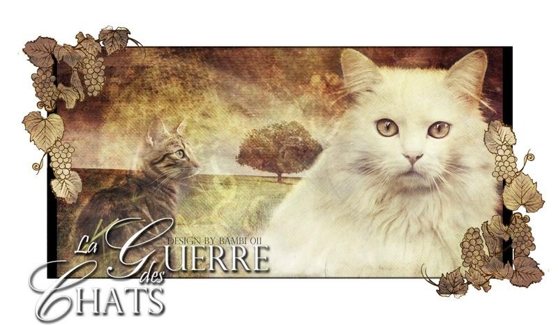 La guerre des chats