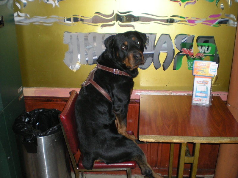 Tsar au bar Dscn0510