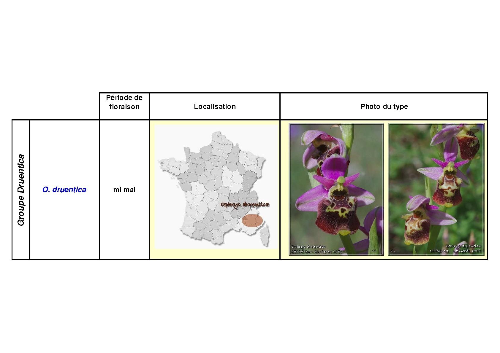 Le complexe fuciflora du Sud Est... simplifié Fucifl17
