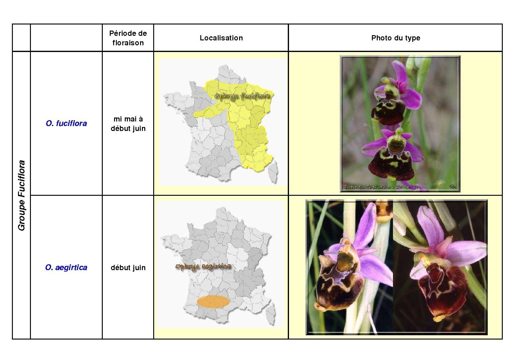 Le complexe fuciflora du Sud Est... simplifié Fucifl18