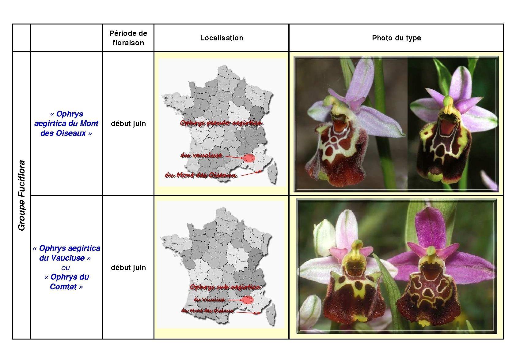 Le complexe fuciflora du Sud Est... simplifié Fucifl19