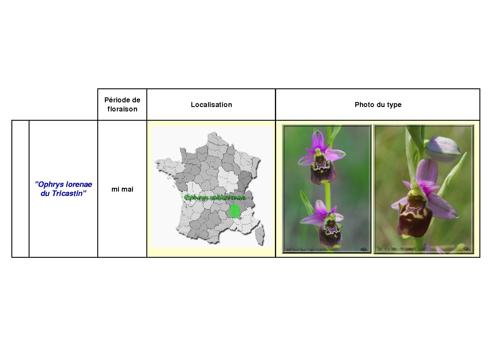 Le complexe fuciflora du Sud Est... simplifié Fucifl21