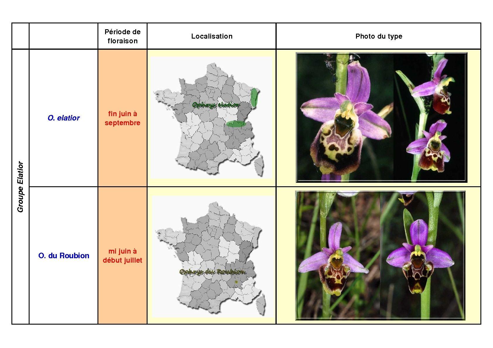Le complexe fuciflora du Sud Est... simplifié Fucifl22