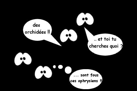 """Nouvelle espèce d'orchidée """"nocturne""""? Mod_ar10"""
