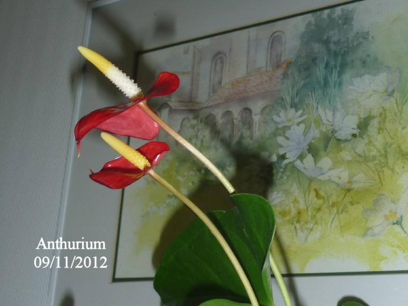 Entretien Anthurium - Page 2 Anthur10