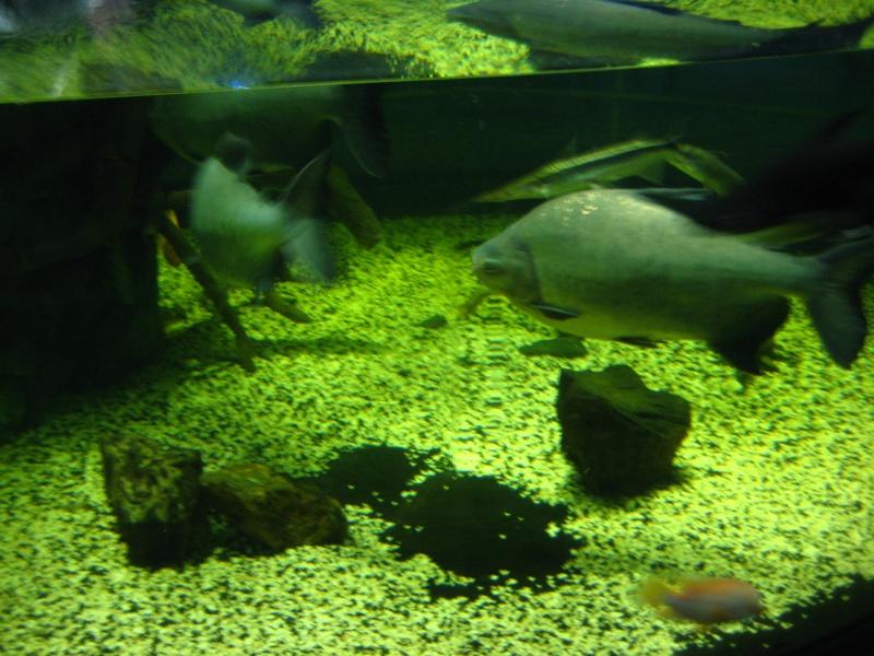 [Reportage] Présentation de l'aquarium public de PRAGUE (République tchèque) Prague10