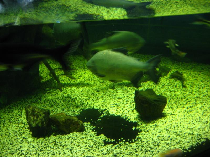 [Reportage] Présentation de l'aquarium public de PRAGUE (République tchèque) Prague11