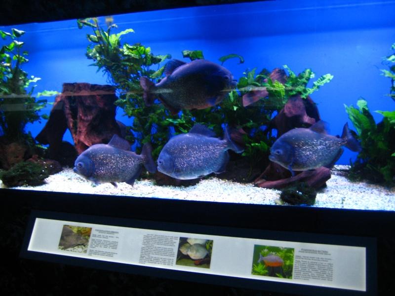 [Reportage] Présentation de l'aquarium public de PRAGUE (République tchèque) Prague12