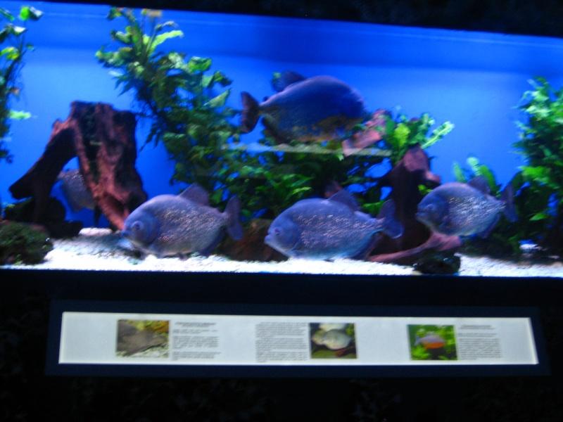 [Reportage] Présentation de l'aquarium public de PRAGUE (République tchèque) Prague13