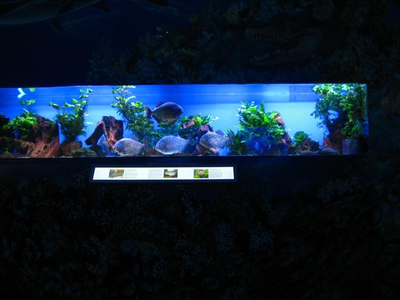 [Reportage] Présentation de l'aquarium public de PRAGUE (République tchèque) Prague14