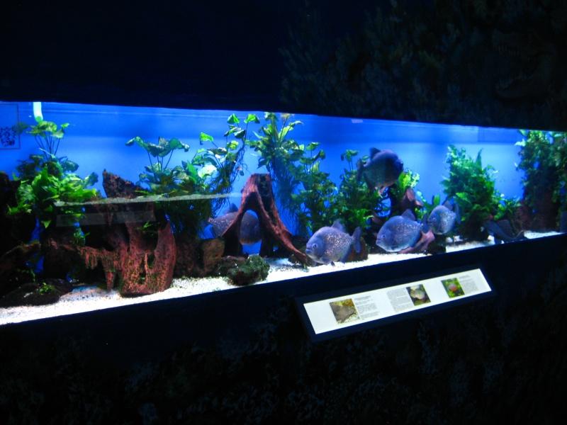 [Reportage] Présentation de l'aquarium public de PRAGUE (République tchèque) Prague15