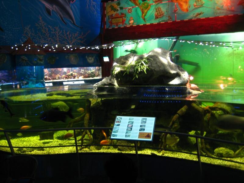 [Reportage] Présentation de l'aquarium public de PRAGUE (République tchèque) Prague16