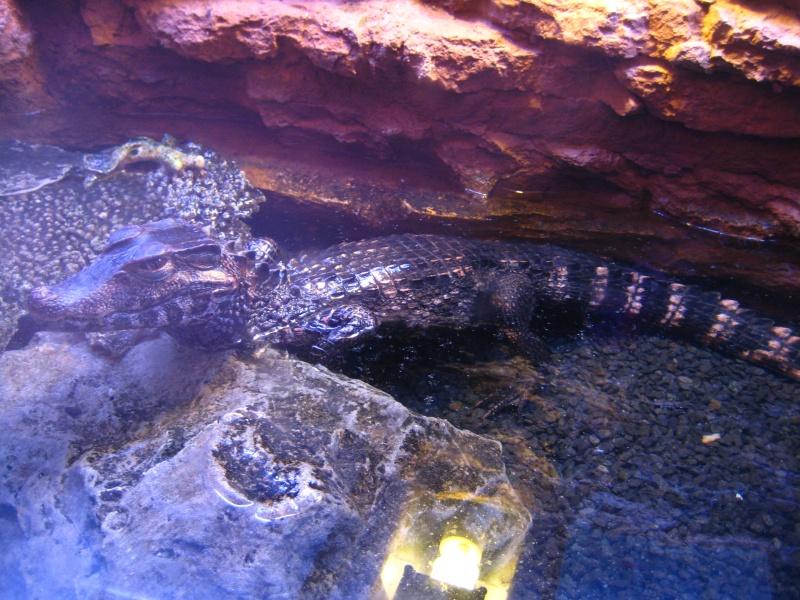 [Reportage] Présentation de l'aquarium public de PRAGUE (République tchèque) Prague18
