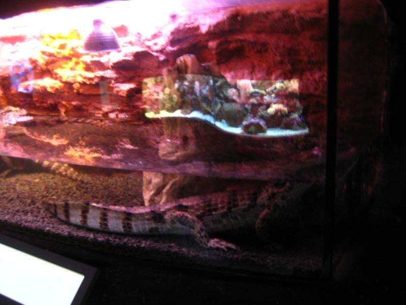 [Reportage] Présentation de l'aquarium public de PRAGUE (République tchèque) Prague19