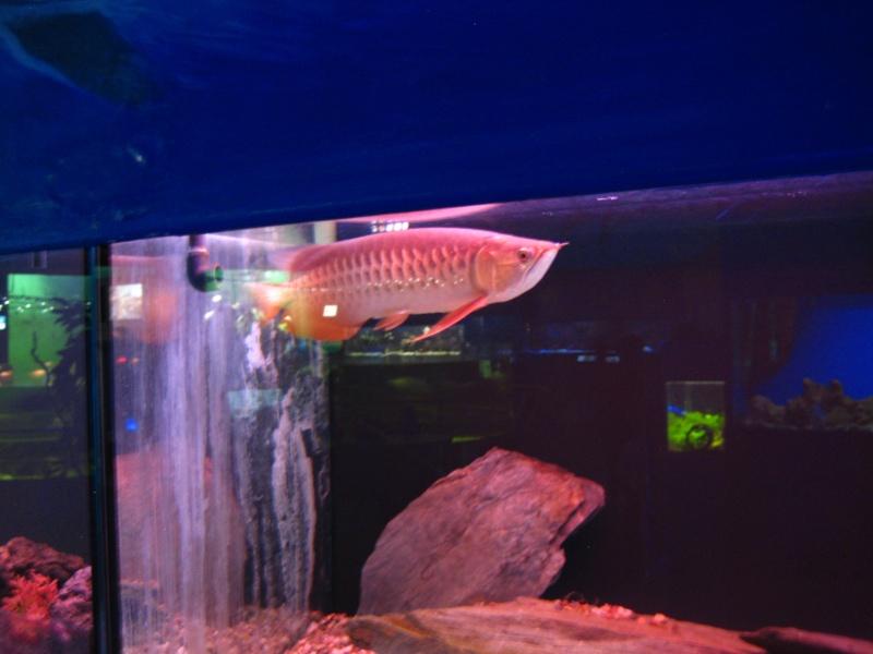 [Reportage] Présentation de l'aquarium public de PRAGUE (République tchèque) Prague21