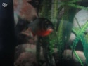 [Association Amazonia-Piranha]  25533110