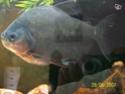 [Association Amazonia-Piranha]  40604210