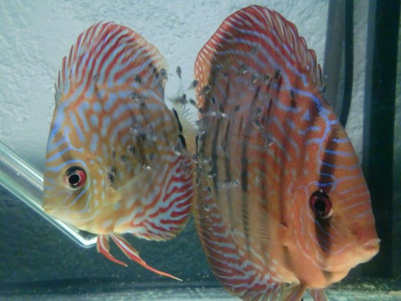 Repro de mon couple stendker 16/01/2012 Cimg4429