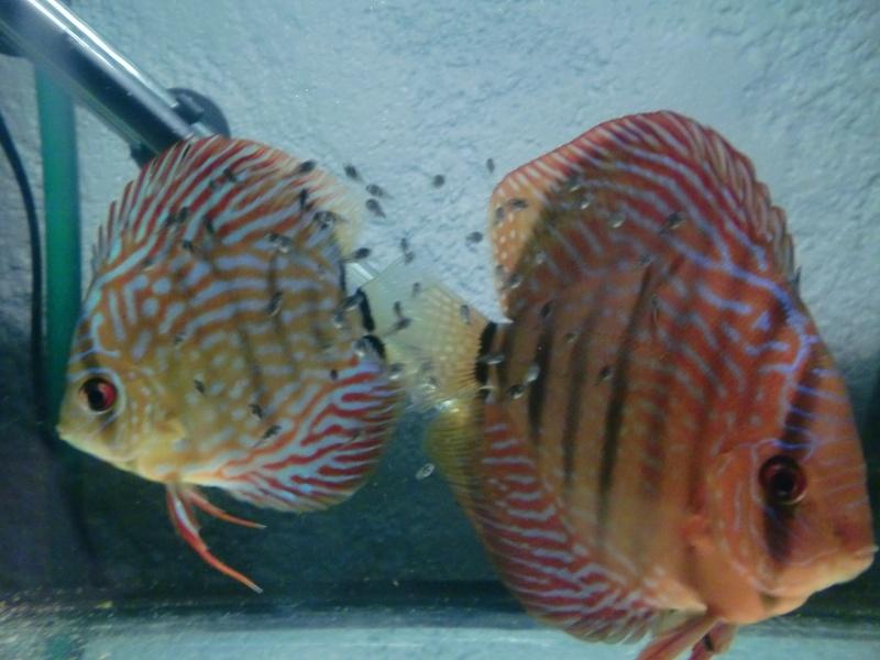Repro de mon couple stendker 16/01/2012 Cimg4430
