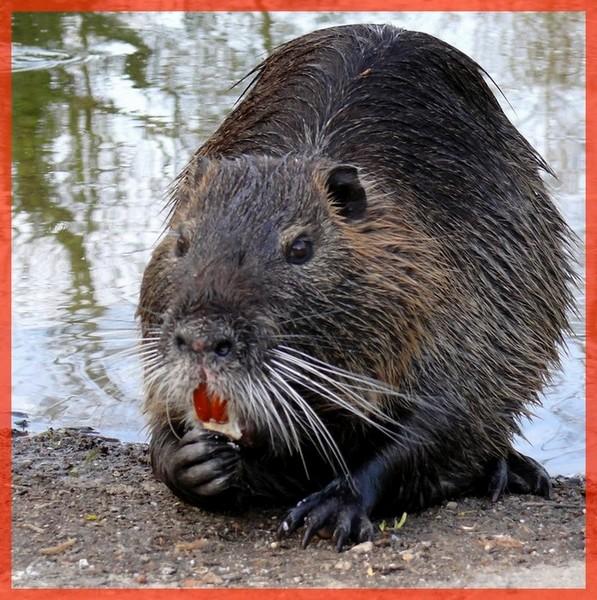 sensibilation a la cause animal,a votre bon coeur Ragond10