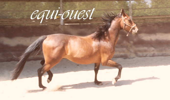 Equi-Ouest