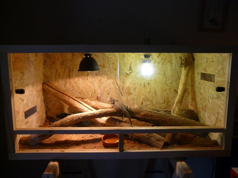 Le terrarium d'Imota 00210