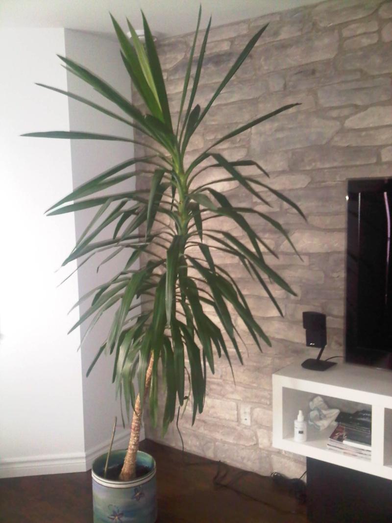 Connaisseurs demandés: Je cherche le nom de ma plante! Qubec-10