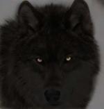 créer un forum : Loups vs Renards 6-3210